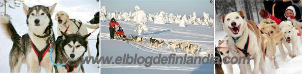 Disfruta del paseo de tu vida con tu propio trineo de huskys