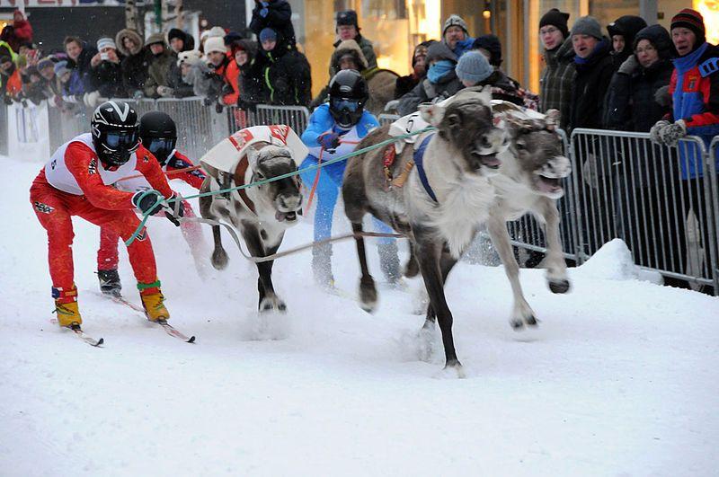 carrera de renos rovaniemi