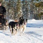 Excursión en trineo de huskys (Foto HelloLapland)