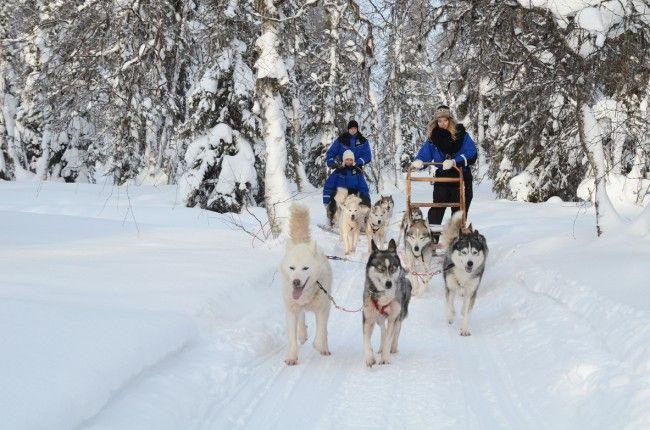 Paseo en huskys por Laponia