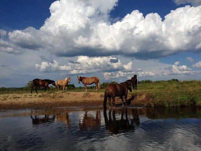 Isla de los caballos excursión moto de agua rovaniemi