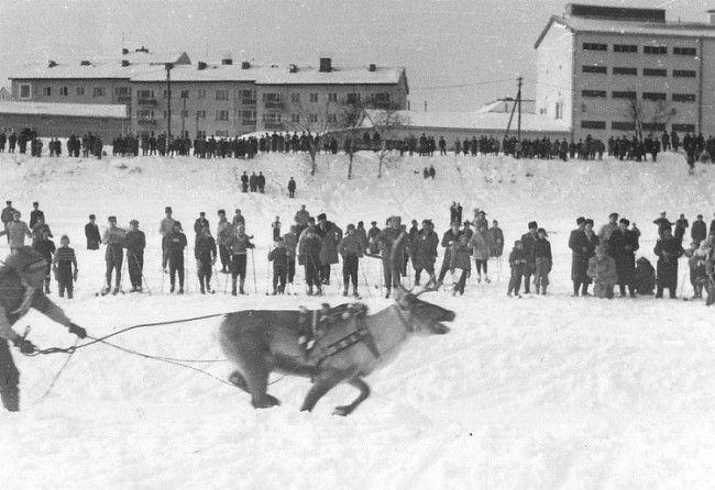 Carrera de renos en Rovaniemi, año 1956