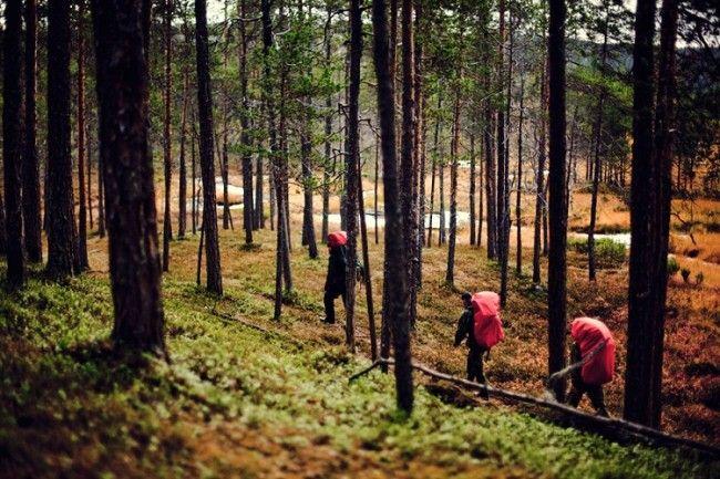 Mochilas cargadas para-una excursión de varios días en Lemmenjoki