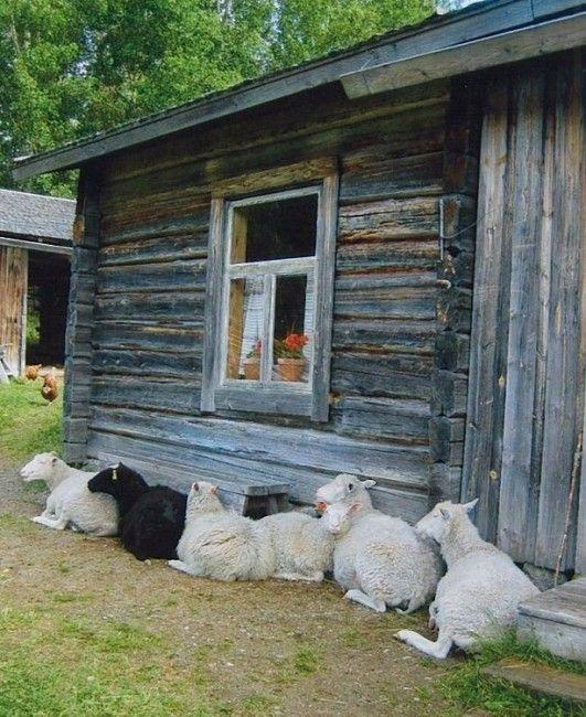 No hay renos en Savonia del Sur