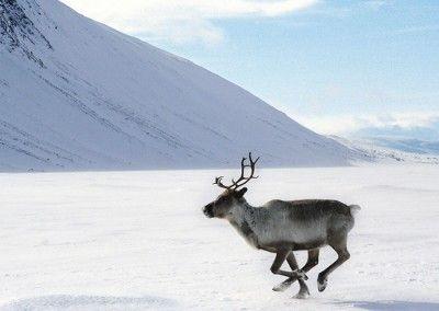 Actividades de invierno en Levi