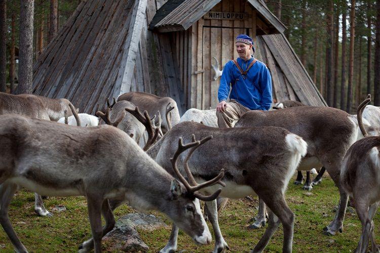 En el municipio de Salla hay más renos que personas