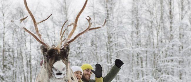 Saludos desde Laponia