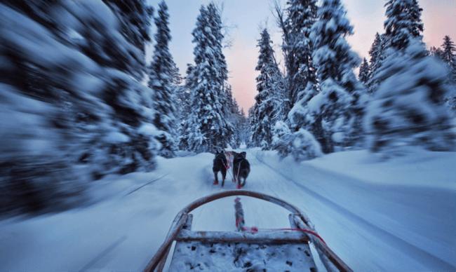 Huskys corriendo en Rovaniemi