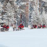 Excursiones con renos en Ivalo