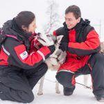 Excursiones con huskys en Ivalo