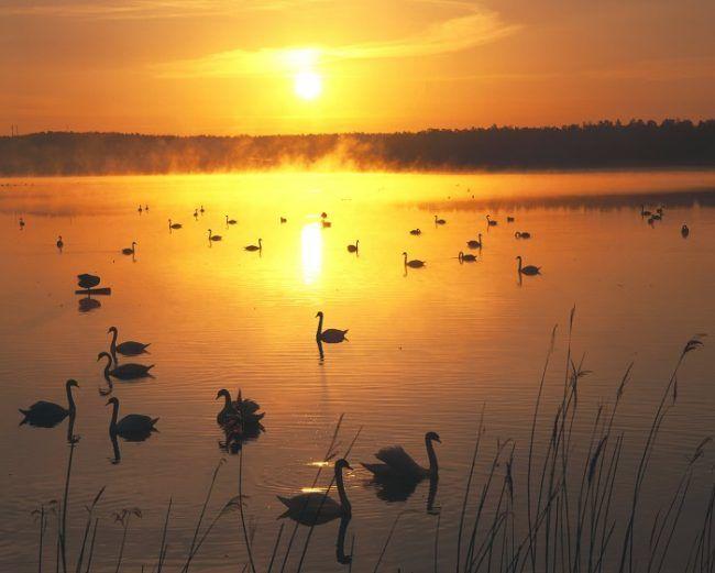 Sol de medianoche y cisnes cantores