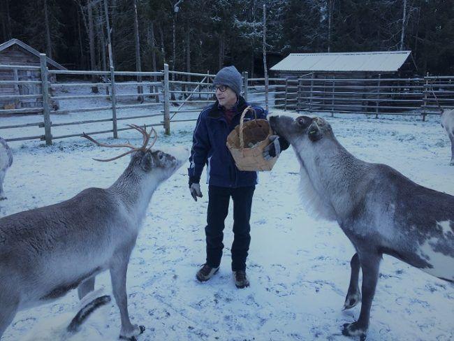 Alimentando a los renos durante el mes de octubre