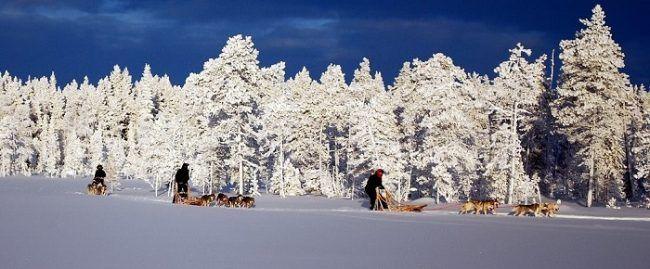 Disfrutando del puro invierno durante un safari con huskys