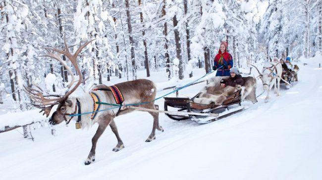 Durante un safari cerca del pueblo de Papá Noel
