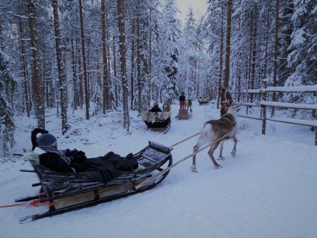 Iniciando un safari con renos