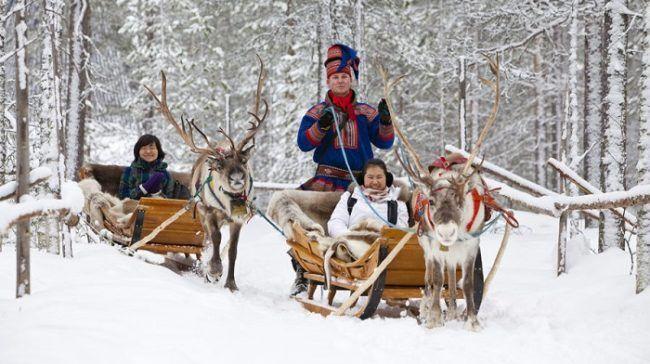 Safari con renos en Laponia