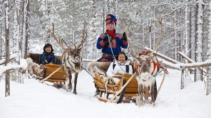 Excursiones con trineo de renos en Laponia