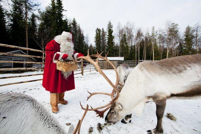 Papá Noel dando líquenes a sus renos