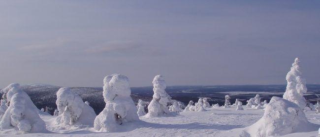 Arboles cubiertos de nieve y escarcha en la colina de Levi (Levintunturi)