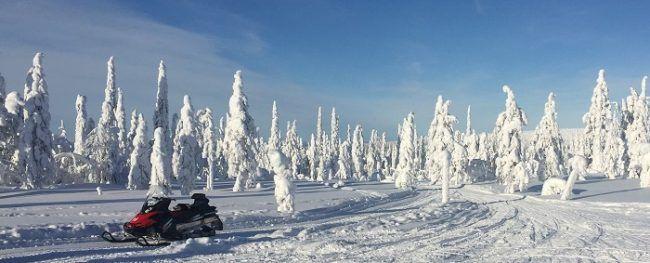 En algún lugar de Laponia... Abetos que no son gigantes