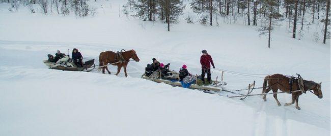 Excursión con caballos finlandeses