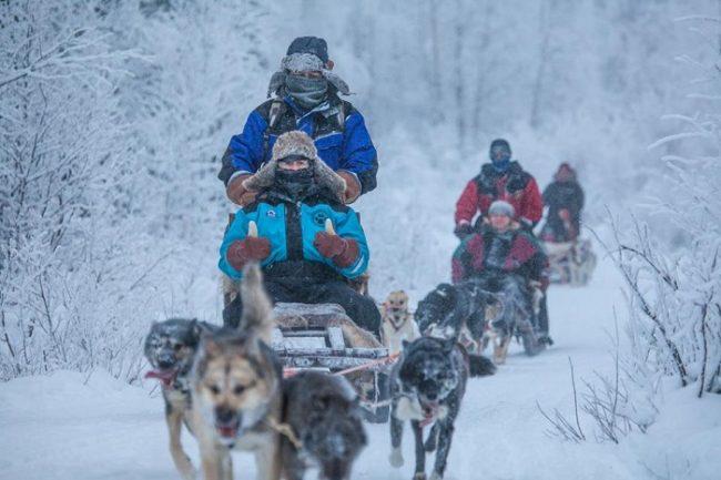 Safari con perros husky en Torassieppi