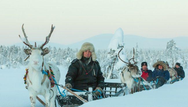Safari con renos en los alrededores de Torassieppi