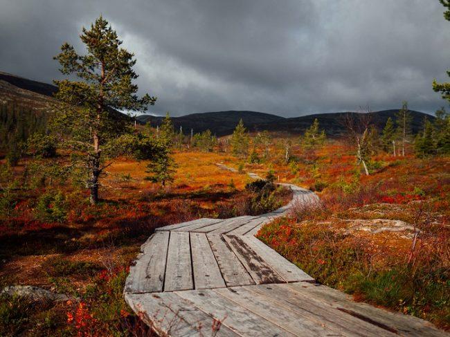 Camino en el Parque Nacional Pallas Yllästunturi en otoño