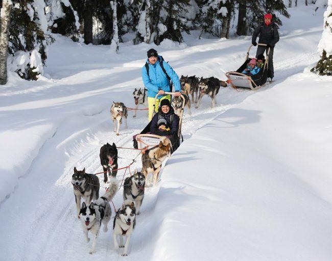 Las excursiones con Huskys en Laponia son una actividad apta para toda la familia