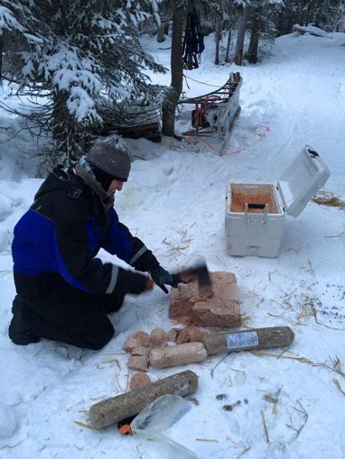 Preparando la comida de los huskys