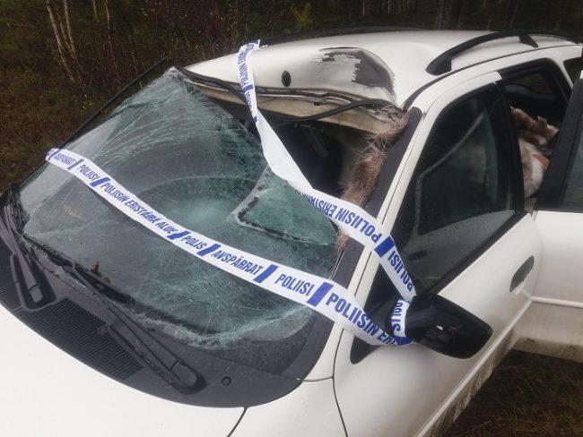 Accidente con un alce. Afortunadamente el pobre animal no entro en el habitáculo y el conductor salió ileso
