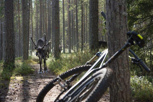 La bicicleta de montaña es una buena manera de recorrer el Parque Nacional de Hossa