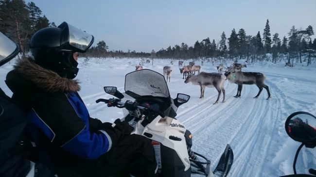 Safari con moto de nieve en los alrededores del lago Inari