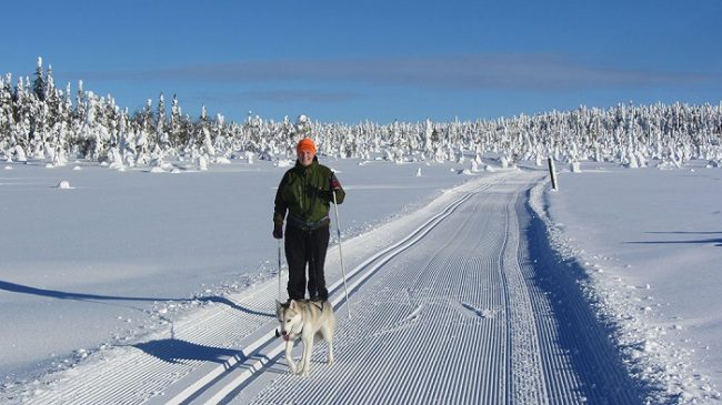 Bonito día para el esquí de fondo en el Parque Nacional de Syöte