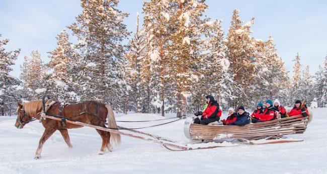 Excursión con caballo finlandés