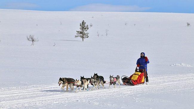Excursión con Huskys en el Espacio Natural Protegido de Tarvantovaara