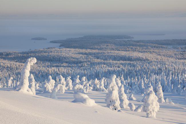 Parque Nacional de Riisitunturi en invierno