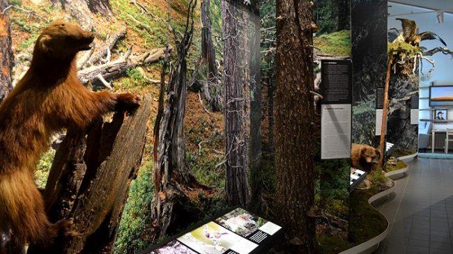 En el centro de visitantes de Savukoski hay una buena exposición de la naturaleza