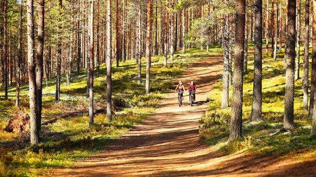 En el Geoparque de Rokua se pueden hacer buenas y largas excursiones en bicicleta de montaña