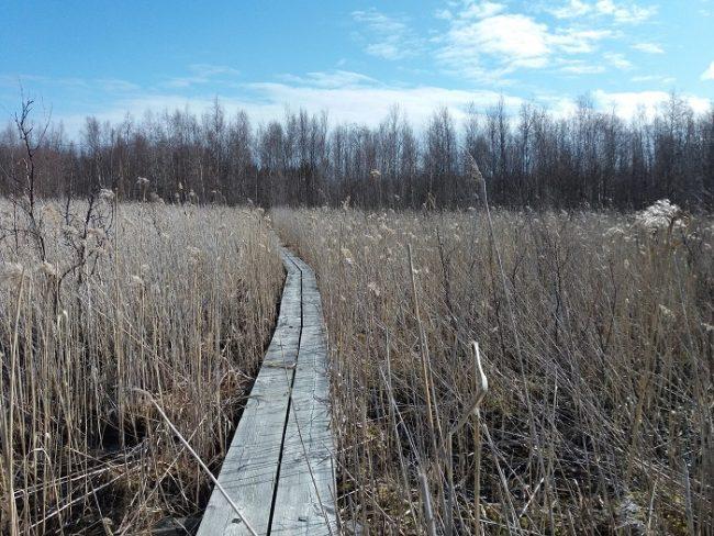 Los caminos que pasan por zonas pantanosas estan equipados con tablones para facilitar el paso