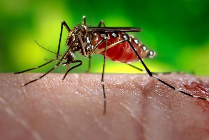 Los mosquitos en Finlandia