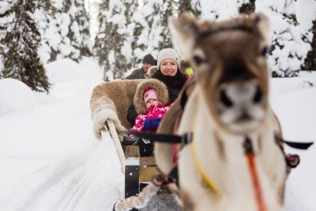 Excursión con renos en los bosques de Ruka