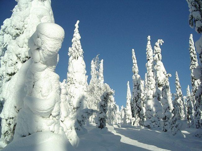 Árboles llenos de nieve cerca de la ciudad de Kuusamo