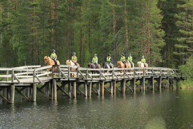 Excursión con caballos finlandeses organizada por el Hotel Punkaharju