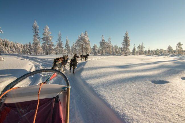 Excursión con huskys alrededor de la ciudad de Kuusamo