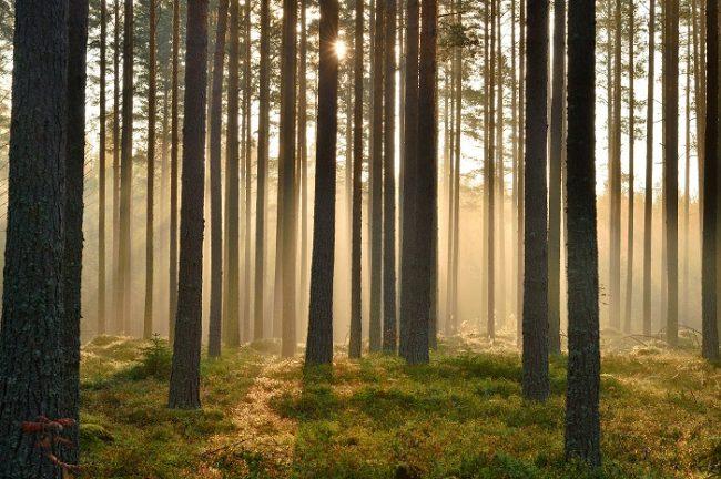 El bosque de Finlandia nos ofrece imagenes como esta