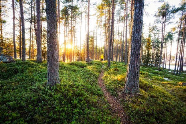 Puesta de Sol en el bosque de Finlandia