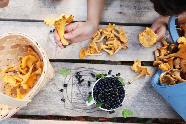 Setas y bayas son los frutos del bosque de Finlandia