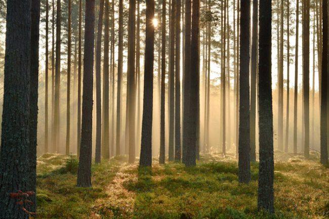 El bosque de Suovanlahti en Viitassari