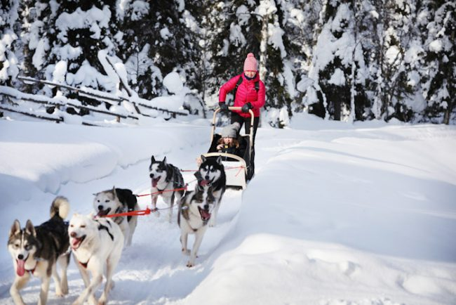 Excursión con perros husky en Ruka